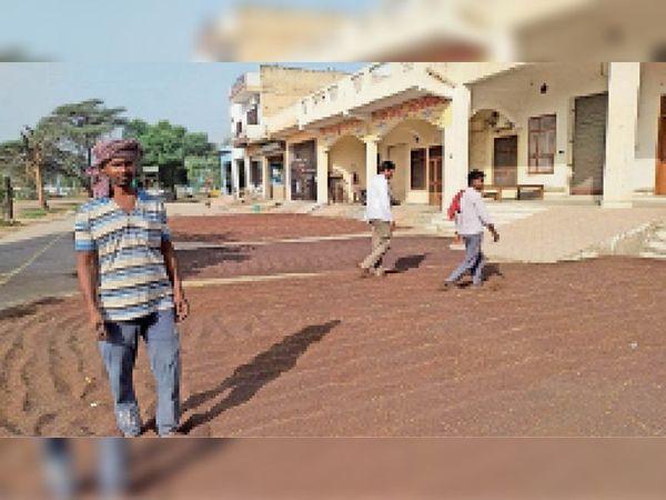 अटेली अनाज मंडी में सरसों को सूखाते हुए किसान। - Dainik Bhaskar