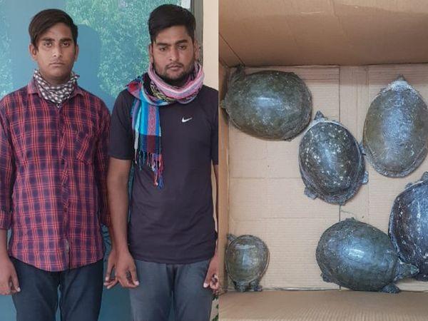 जयपुर फॉरेस्ट टीम की गिरफ्त में तस्कर और बरामद कछुए। - Dainik Bhaskar