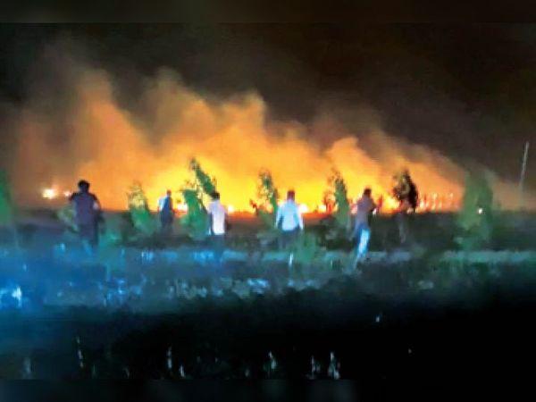 सीवन | गेहूं की फसल में लगी आग पर काबू पाने का प्रयास करते किसान। - Dainik Bhaskar
