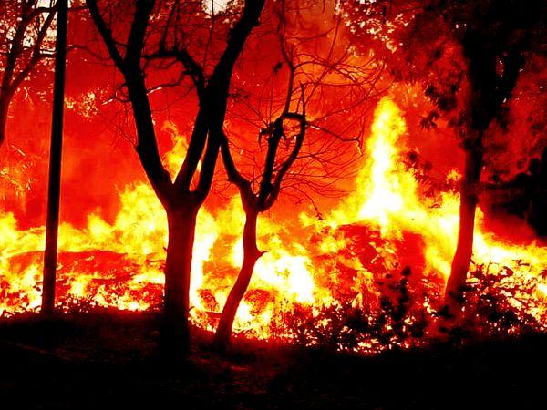 उदयपुर के कमल तलाई में लगी भीषण आग। 4 घंटे की मशक्कत के बाद फायर शाखा ने आग पर पाया काबू। - Dainik Bhaskar