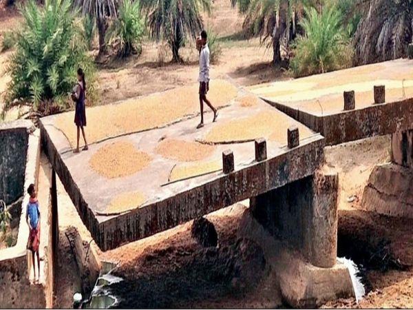 पुलिया पर गांव के लोग महुआ सुखा रहे हैं। - Dainik Bhaskar