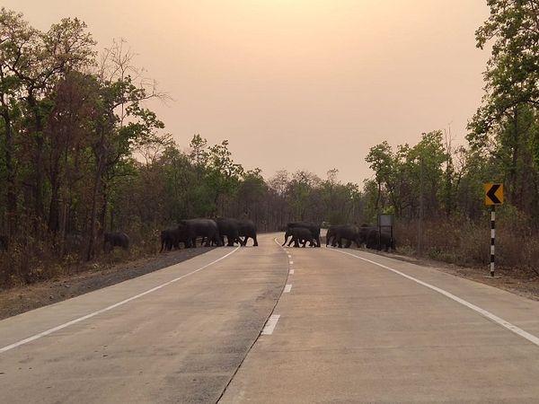 सुबह होने के बाद हाथियों का दल सड़क पार कर जंगल की ओर निकल गया।  बताया जा रहा है कि समूह में 10 से ज्यादा हाथी हैं।