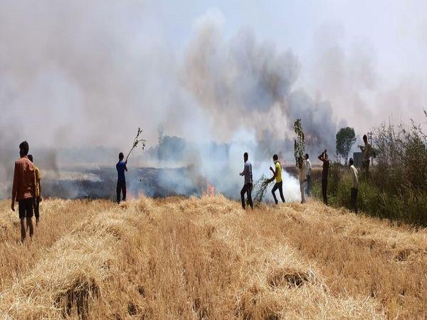इसराना में गेहूं की फसल में लग� - Dainik Bhaskar