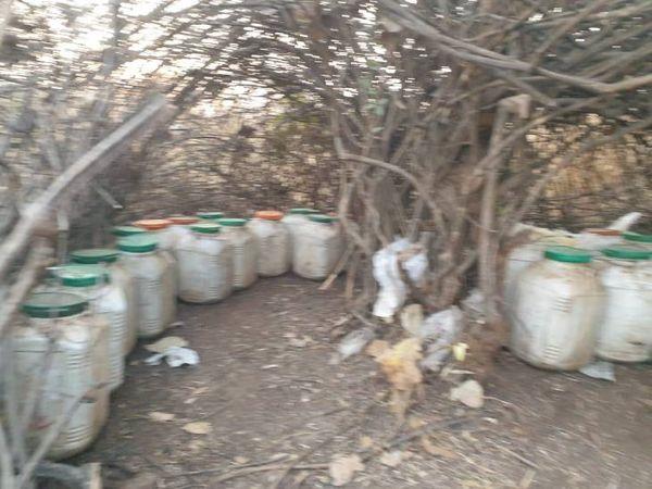 झाड़ियों में डिब्बों में भरकर छिपाया गया था महुआ लाहन।