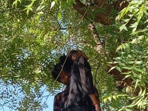 पेड़  पर लटके प्रेमी युगल - Dainik Bhaskar