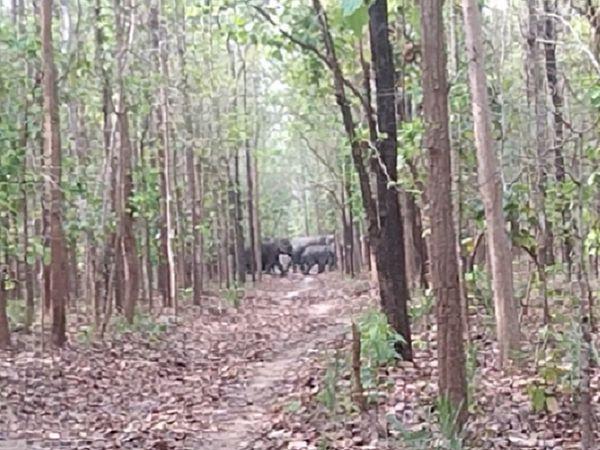 25 से 30 ग्रामीणों के समूह हाथियों के झुंड के पीछे वीडियो बनाते हुए जाने लगा।  इसी दौरान एक हाथी ने पलक उन्हें दौड़ा लिया।
