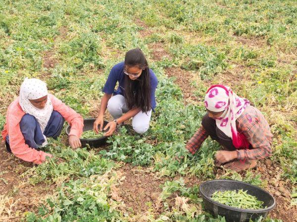 डेयरी फार्मिंग के साथ श्रद्धा थोड़ी बहुत खेती भी करती हैं ताकि भैंसों के लिए चारे की व्यवस्था हो जाए।