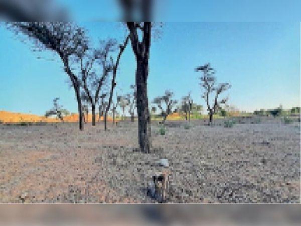 पापड़दा | जौंण किले के समीप एक दशक पहले लगाई नर्सरी में अब छाई वीरानी, यहां से हरे पेड़ों को लोग काटकर ले गए। - Dainik Bhaskar