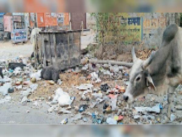 दौसा|नई मंडी रोड स्थित पीएनबी चौराहे के पास फैली गंदगी और उसमें मुंह मारता सांड। - Dainik Bhaskar