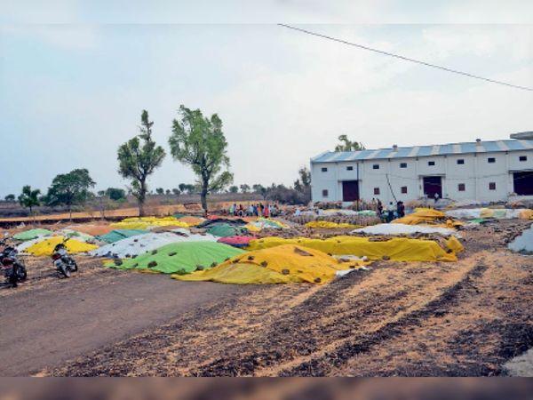 बारदान नहीं होने से उपार्जन केंद्रों के बाहर इस तरह गेहूं को खुले में रखा जा रहा है। - Dainik Bhaskar