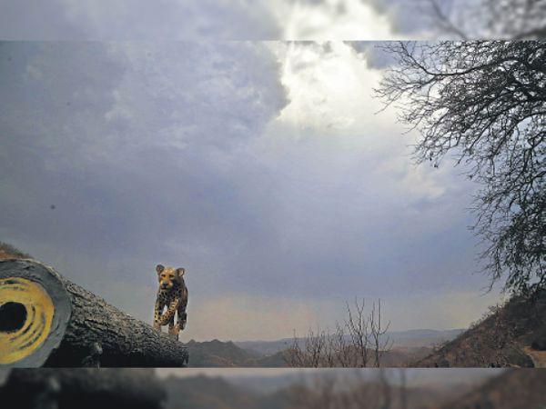 शहर में दिनभर बादल छाए रहे। दोपहर 2.30 बजे सज्जनगढ़ के गोरेला प्वाइंट से लिया गया नजारा। यहां तेंदूए की डमी लगाई हुई है। - Dainik Bhaskar
