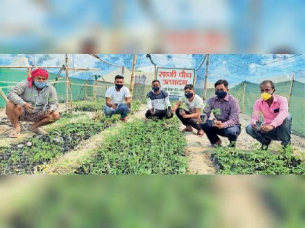 परसौनी के वरीय वैज्ञानिक डॉ अभिषेक प्रताप सिंह ने किसानों को सहजन का पौधा दिया। - Dainik Bhaskar