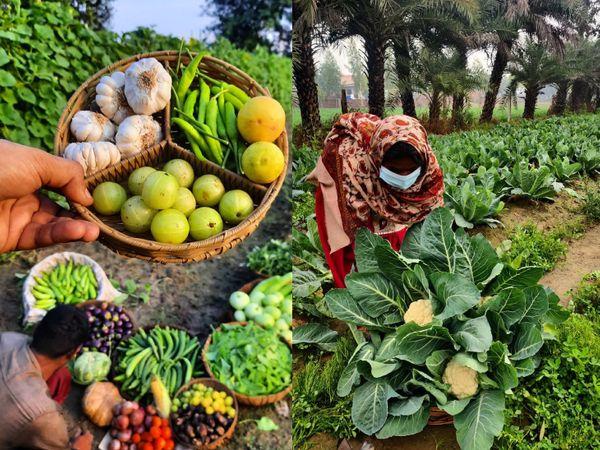 मृणाल के खेत में लगी सब्जियां। उनकी टीम अभी 50 से ज्यादा तरह की सब्जियां और फल उगा रही है। वे हर सीजन के मुताबिक प्रोडक्ट तैयार करते हैं।