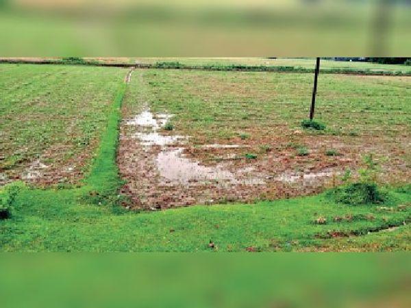 खेत में जमा बारिश का पानी। - Dainik Bhaskar