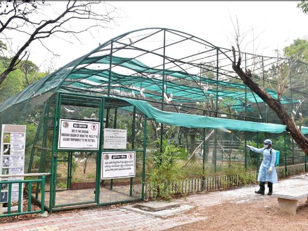 शेरों में संक्रमण के लक्षण मिलने के बाद हैदराबाद के नेहरू जूलॉजिकल पार्क को सैनिटाइज किया जा रहा है। - Dainik Bhaskar