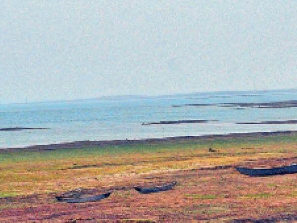 बैकवाटर पीछे खिसकने से पानी की जगह जमीन दिख रही है। मछुआरों ने यहां पत्थर रख नावों को सुरक्षित कर दिया है।   फोटो   विकास चौहान - Dainik Bhaskar