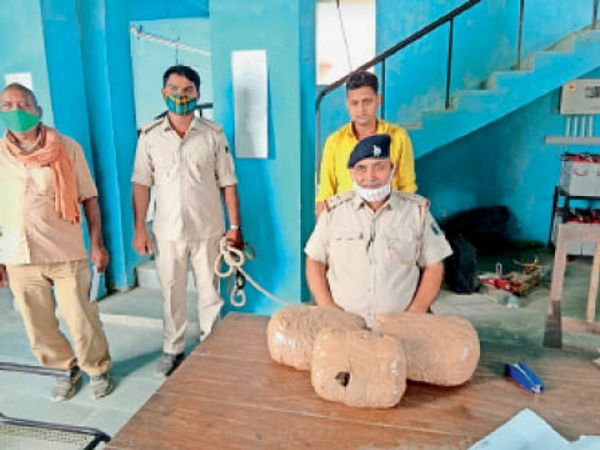 गांजा के साथ गिरफ्तार तस्कर - Dainik Bhaskar