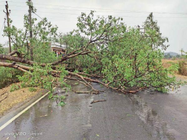 आंधी से बांका कटाेरिया मुख्य मार्ग में गिरा पेड़। - Dainik Bhaskar