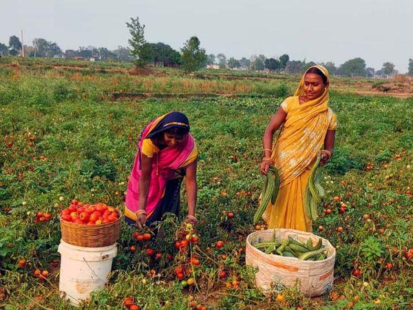 लॉकडाउन की वजह से बड़े व्यापारी खेतों तक नहीं पहुंच रहे और मजबूरन किसानों को छोटे सब्जी विक्रेताओं को बेचना पड़ रहा है। - Dainik Bhaskar