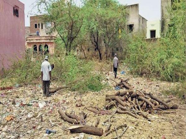 चांदपोल श्मशान में लकड़ियाें की कमी हुईं तो बबूल के पेड़ों को काटा जा रहा है। - Dainik Bhaskar