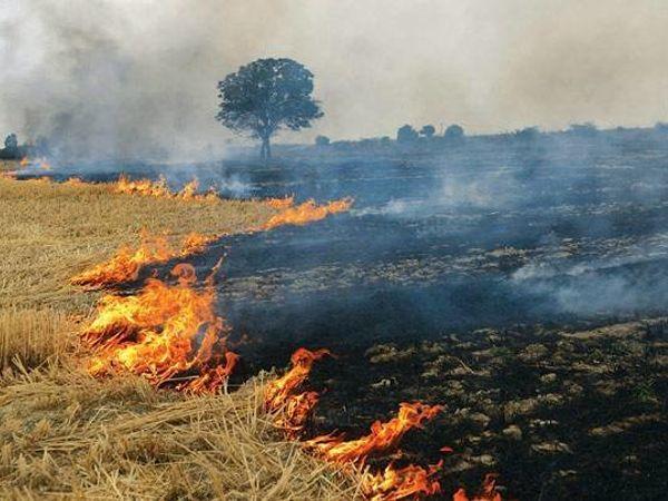 पुलिस ने केस दर्ज कर आरोपी किसान व उसके नौकर की तलाश शुरू कर दी है। - Dainik Bhaskar