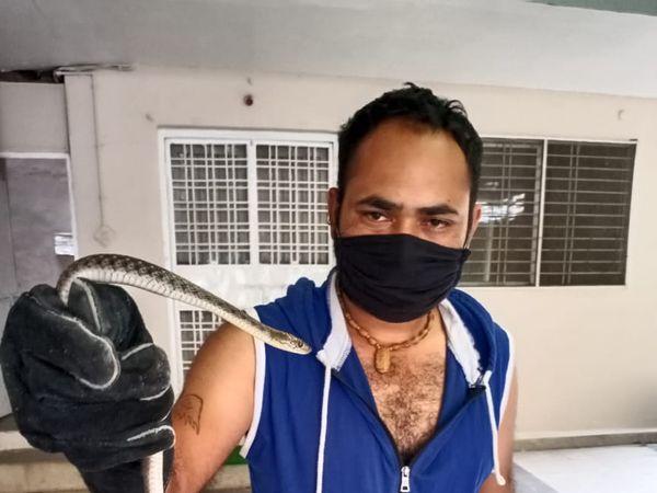 विधायक कार्यालय से पकड़ा सांप। - Dainik Bhaskar
