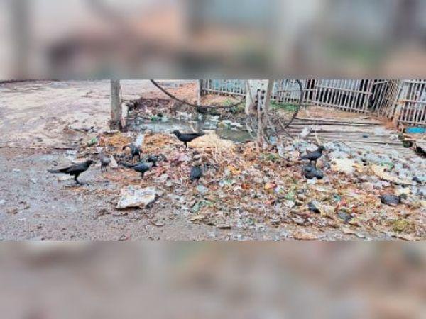 कचरे का उठाव नहीं होने के कारण गिलेशन बाजार में फैली गंदगी। - Dainik Bhaskar