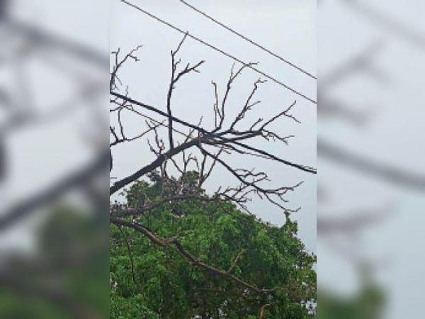 बिजली के तार पर गिरी पेड़ की टहनी। - Dainik Bhaskar