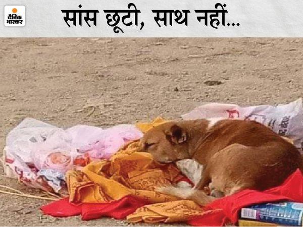 शेरघाटी के राम मंदिर मुक्तिधाम में बैठा कुत्ता। - Dainik Bhaskar