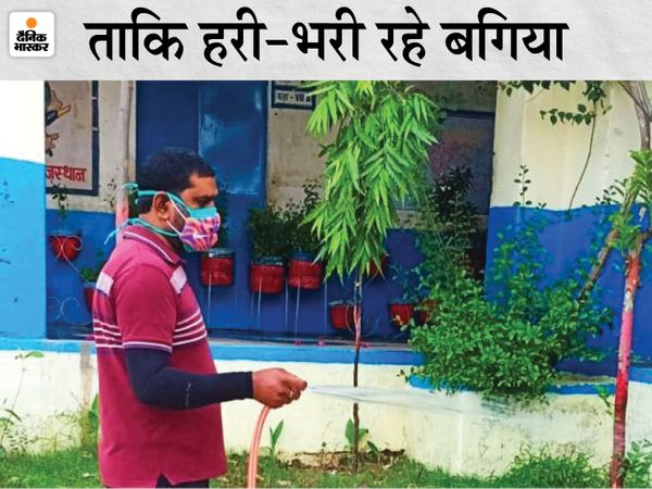 शारीरिक शिक्षक घनश्याम पेड़ पौधों को बचाने के लिए छुट्टी के बावजूद हर दिन पहुंच रहे स्कूल। - Dainik Bhaskar
