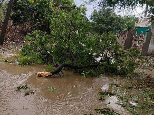 शहर में आंधी-पानी से पेड़ गिर गए।