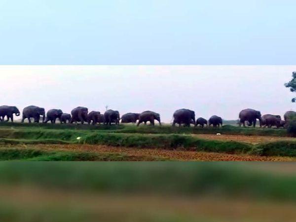 हाथियों के क्षेत्र में आने के बाद से आसपास के ग्रामीण दहशत में हैं। - Dainik Bhaskar