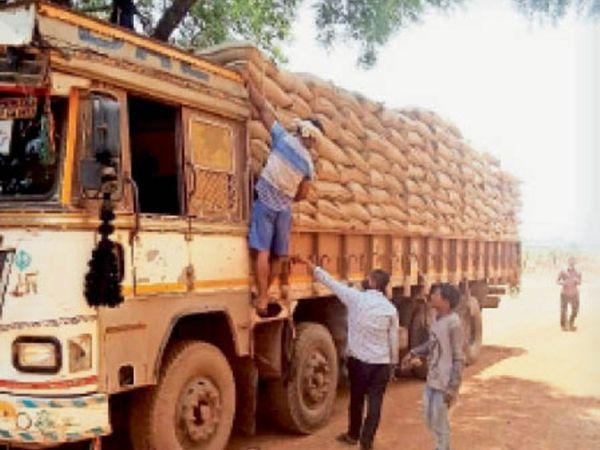 जिले की सभी सहकारी समितियों में बीज का भंडारण किया जा रहा है। - Dainik Bhaskar