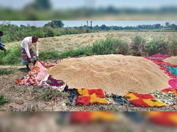 खुले में सुखा रहे धान, बेमौसम बारिश का भी डर - Dainik Bhaskar