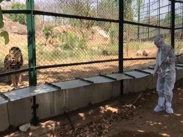 जोधपुर के माचिया पार्क में वन्यजीवों के पिंजरे के बाहर पीपीई सूट पहन सफाई करता एक कर्मचारी। - Dainik Bhaskar