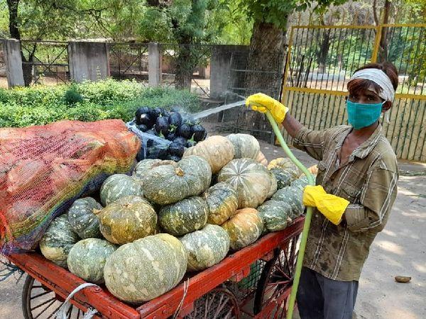 जू में सब्जियों को पानी में मिले केमिकल से धोता कर्मचारी। - Dainik Bhaskar