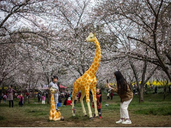 वुहान के एक पार्क में बच्चों के साथ मौजूद महिला। एक रिपोर्ट के मुताबिक, चीन के युवा परिवार से ज्यादा अहमियत कॅरियर को दे रहे हैं।
