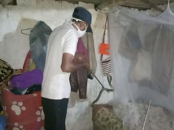 दुर्ग में नेचर की टीम ने बड़ी मशक्कत के बाद कोबरा स्नाप का रेस्क्यू.