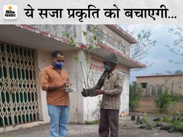 चौकी गांव में बिना मास्क घूमने वालों को दी जा रही पांच पौधे लगाने की सजा। - Dainik Bhaskar