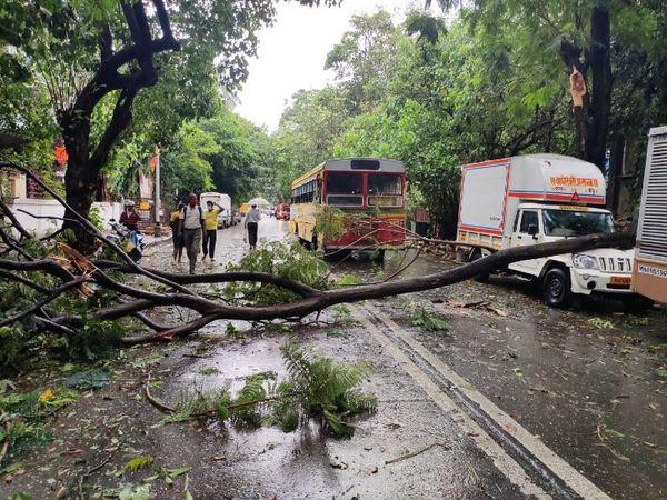 वडाला उद्योग भवन इलाके में पेड़ गिरने से रास्ता ब्लॉक हुआ है।