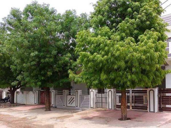 विक्रमपुरा गांव में लोगों ने मुख्य द्वार के आगे भी नीम का पेड़ आया, तो उसे काटा नहीं।