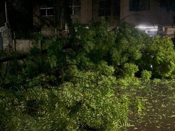 राजकोट में देर रात 75 किमी प्रति घंटे की रफ्तार से हवाएं चलने से कई जगह पेड़ गिर गए।