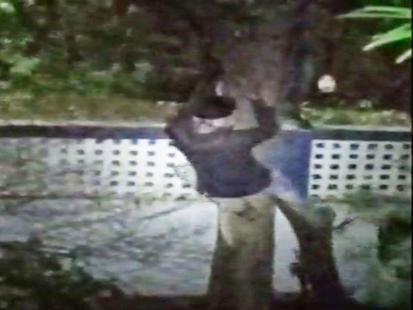 जब तक पुलिस मौके पर पहुंचे चोर पेड़ को काट कर अपने साथ ले गए। - Dainik Bhaskar