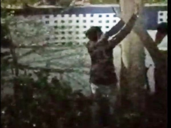 चोर मजे से पेड़ को काटते रहे और डॉक्टर साहब वीडियो बनाते रहे।
