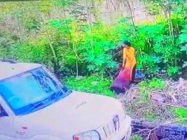 शव को पेड़ों के बीच फेंकने का प्रयास कर रही महिला कैमरे में कैद हुई थी। इसके बाद पति के साथ मिलकर उसने इसे जलाने का भी प्रयास किया। - Dainik Bhaskar