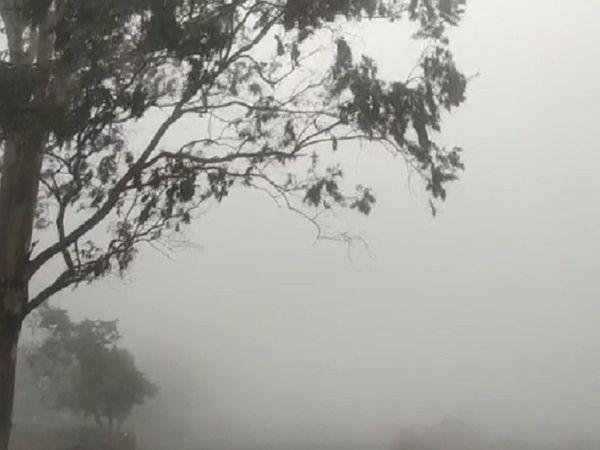 मैनपाट में बारिश के साथ कोहरा और धुंध छा गई है।