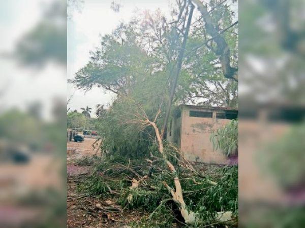 पेड़ गिरने से प्रसूतिगृह के फोकल पाइंट बंद हो गए। - Dainik Bhaskar