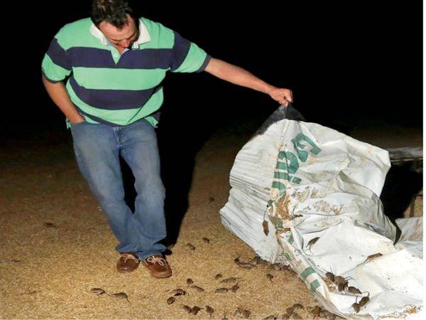 ब्रूस बार्न्स नाम के किसान बोले- खेतों में बुआई कर जुआ खेल रहे। - Dainik Bhaskar