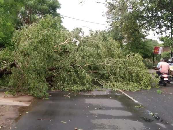अलवर में कलेक्टर आवास के पास पेड़ गिरा। लाइन भी टूटी। - Dainik Bhaskar