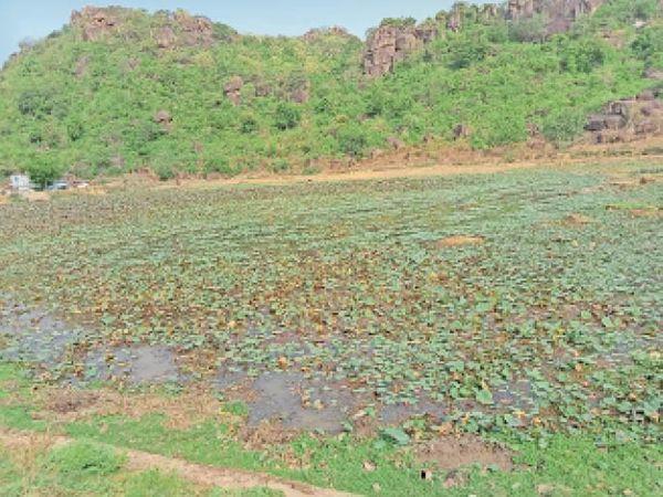 धार्मिक आस्था से जुड़े शहर के कंकालीन तालाब में पानी बहुत कम है जबकि कीचड़ बहुत ज्यादा है। - Dainik Bhaskar